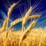 prodotti chimici agricoltura